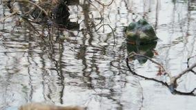 Τα ζωηρόχρωμα πλαστικά μπουκάλια των ποτών επιπλέουν στο νερό και φράζουν το περιβάλλον Η έννοια ενός προβλήματος απόθεμα βίντεο