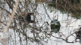 Τα ζωηρόχρωμα πλαστικά μπουκάλια των ποτών επιπλέουν στο νερό και φράζουν το περιβάλλον Η έννοια ενός προβλήματος φιλμ μικρού μήκους