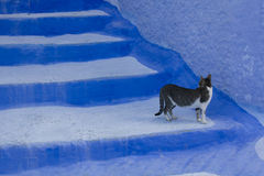 τα ζωηρόχρωμα σκαλοπάτια Στοκ φωτογραφία με δικαίωμα ελεύθερης χρήσης