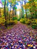 Τα ζωηρόχρωμα φύλλα πτώσης καλύπτουν το δασικό πάτωμα με τάπητα Στοκ Εικόνα