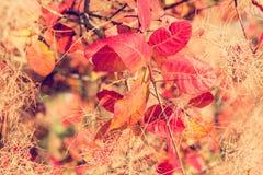 Τα ζωηρόχρωμα φύλλα πτώσης σε ένα δέντρο κλείνουν επάνω Στοκ φωτογραφία με δικαίωμα ελεύθερης χρήσης