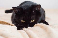 Τα ζώα βοηθούν να υπερνικήσουν την κατάθλιψη με την ενέργειά τους στοκ φωτογραφία