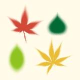 Τα ημίτοά διανυσματικά φύλλα των φυτών Στοκ Φωτογραφία