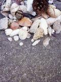 Τα θαλασσινά κοχύλια και η πέτρα στο έδαφος, θερινή παραλία, νύχια, φύλλο, κλείνουν επάνω τη φωτογραφία στοκ φωτογραφία