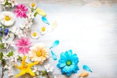 Τα θερινά λουλούδια άνοιξης στις ξύλινες αναδρομικές σανίδες αφαιρούν το floral υπόβαθρο στοκ φωτογραφία