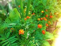 Τα θερινά λουλούδια στοκ εικόνα με δικαίωμα ελεύθερης χρήσης