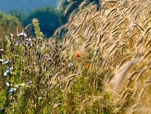 Τα θερινά wildflowers πρωινού ήλιων Στοκ Φωτογραφίες