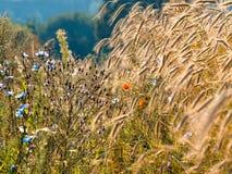 Τα θερινά wildflowers πρωινού ήλιων Στοκ Εικόνες