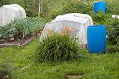 Τα θερμοκήπια, που καλύπτονται με μια ταινία πολυαιθυλενίου και μπλε πλαστικά βαρέλια για το νερό, στέκονται στον κήπο Στοκ Φωτογραφίες