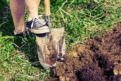 Τα θηλυκά πόδια που φορούν τα παλαιά πάνινα παπούτσια σκάβουν ένα χώμα χρησιμοποιώντας ένα φτυάρι Στοκ φωτογραφία με δικαίωμα ελεύθερης χρήσης