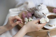 Τα θηλυκά χέρια κρατούν ένα άσπρο λουλούδι Πρόγευμα στο σπορείο καφές αρωματικός Λεπτά ελαφριά χρώματα ρωμανικός Κάρτα στοκ εικόνα