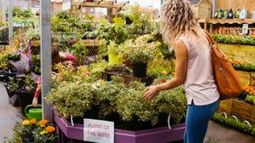 Τα θηλυκά λουλούδια ποτίσματος ανθοκόμων με το πότισμα μπορούν ενώ πελάτης που εξετάζει το φυτό γλαστρών απόθεμα βίντεο