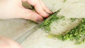 Τα θηλυκά χέρια κόβουν ένα πράσινο μάραθο στα μικρά κομμάτια απόθεμα βίντεο