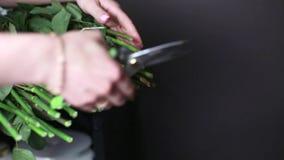 Τα θηλυκά χέρια με το ψαλίδι κόβουν το κατώτατο σημείο των μίσχων των τριαντάφυλλων απόθεμα βίντεο