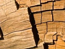 Τα διάσημα μεγάλα sequoia δέντρα είναι Στοκ Φωτογραφία