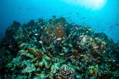 Τα διάφορα ψάρια κοραλλιών, squirrelfish κολυμπούν επάνω από τις κοραλλιογενείς υφάλους στην υποβρύχια φωτογραφία Gili Lombok Nus στοκ φωτογραφία με δικαίωμα ελεύθερης χρήσης