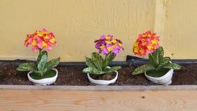 Τα διακοσμητικά λουλούδια Στοκ φωτογραφία με δικαίωμα ελεύθερης χρήσης