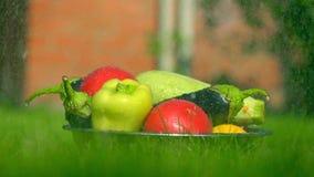Τα διαφορετικά λαχανικά στη χλόη και το μειωμένο νερό μειώνονται, έξοχος σε αργή κίνηση πυροβολισμός, 500 fps πράσινος τόνος απόθεμα βίντεο