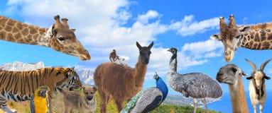Τα διαφορετικά ζώα Στοκ εικόνες με δικαίωμα ελεύθερης χρήσης