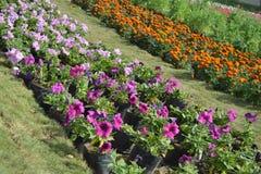 Τα διαφορετικά λουλούδια στο λουλούδι παρουσιάζουν, Ahmedabad Στοκ εικόνες με δικαίωμα ελεύθερης χρήσης