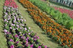 Τα διαφορετικά λουλούδια στο λουλούδι παρουσιάζουν, Ahmedabad Στοκ Εικόνα