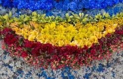 Τα διαφορετικά χρώματα ανθίζουν compositon, τοπ άποψη Στοκ Εικόνα