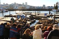 Τα λιοντάρια θάλασσας της αποβάθρας 39 στο Σαν Φρανσίσκο Στοκ Εικόνες