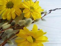 Τα κίτρινα λουλούδια ιτιών σε μια εποχή συγχαρητηρίων φυτεύουν το ευτυχές ντεκόρ εορτασμού γατών, έννοια χαιρετισμού καρτών Στοκ φωτογραφία με δικαίωμα ελεύθερης χρήσης
