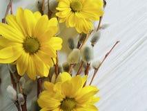 Τα κίτρινα λουλούδια ιτιών σε μια ξύλινη εποχή φυτεύουν το ευτυχές ντεκόρ εορτασμού γατών, έννοια χαιρετισμού καρτών Στοκ Εικόνες