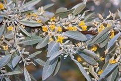 Τα κίτρινα λουλούδια και βγάζουν φύλλα Στοκ Εικόνες