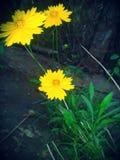 Τα κίτρινα λουλούδια αισθάνονται Στοκ εικόνα με δικαίωμα ελεύθερης χρήσης