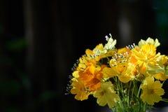 Τα κίτρινα λουλούδια τακτοποιούνται υπέροχα στα όμορφα βάζα και το φως του ήλιου λουλουδιών Στοκ Εικόνες
