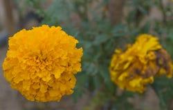 Τα κίτρινα λουλούδια Στοκ φωτογραφία με δικαίωμα ελεύθερης χρήσης