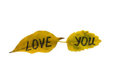 Τα κίτρινα φύλλα με την επιγραφή σας αγαπούν απομονώστε Στοκ Εικόνα