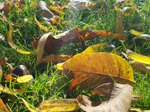 Τα κίτρινα φύλλα στο έδαφος Στοκ φωτογραφίες με δικαίωμα ελεύθερης χρήσης