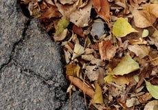 Τα κίτρινα φύλλα φθινοπώρου βρίσκονται στο πεζοδρόμιο Το υπόβαθρο διαιρείται σε δύο μέρη: φύλλα σε μια δευτερεύουσα και γκρίζα άσ στοκ φωτογραφίες
