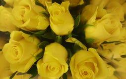 Τα κίτρινα φύσης λουλουδιών bloomig αυξήθηκαν όμορφος Στοκ φωτογραφία με δικαίωμα ελεύθερης χρήσης