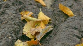Τα κίτρινα φύλλα βρίσκονται στο χώμα λάσπης στο υπόβαθρο φθινοπώρου απόθεμα βίντεο