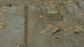 Τα κίτρινα φύλλα που επιπλέουν στη λίμνη είναι τούβλο πετρών φιλμ μικρού μήκους