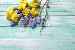 Τα κίτρινες και μπλε λουλούδια άνοιξη και η ιτιά γατών στο τυρκουάζ επιζητούν Στοκ εικόνες με δικαίωμα ελεύθερης χρήσης
