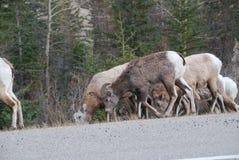 Τα καναδικά δύσκολα βουνά Στοκ φωτογραφίες με δικαίωμα ελεύθερης χρήσης