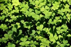 Τα καρδιά-διαμορφωμένα φύλλα στοκ εικόνα με δικαίωμα ελεύθερης χρήσης