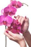 Τα καρφιά Manicured χαϊδεύουν τα σκοτεινά ρόδινα πεντάλια λουλουδιών Στοκ εικόνες με δικαίωμα ελεύθερης χρήσης
