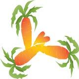 Τα καρότα είναι πολύ πορτοκάλι με τα φύλλα 2 Στοκ Εικόνα
