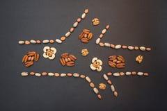 Τα καρύδια υπό μορφή αιμοφόρου αγγείου Στοκ φωτογραφία με δικαίωμα ελεύθερης χρήσης