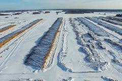 Τα καταρριφθε'ντα δέντρα βρίσκονται κάτω από το ανοιχτό ουρανό Αποδάσωση στη Ρωσία Καταστροφή των δασών στη Σιβηρία Συγκομιδή του Στοκ Εικόνες