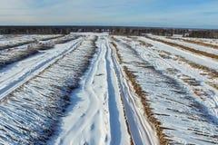 Τα καταρριφθε'ντα δέντρα βρίσκονται κάτω από το ανοιχτό ουρανό Αποδάσωση στη Ρωσία Καταστροφή των δασών στη Σιβηρία Συγκομιδή του Στοκ Φωτογραφίες