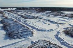 Τα καταρριφθε'ντα δέντρα βρίσκονται κάτω από το ανοιχτό ουρανό Αποδάσωση στη Ρωσία Καταστροφή των δασών στη Σιβηρία Συγκομιδή του Στοκ εικόνες με δικαίωμα ελεύθερης χρήσης