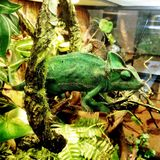 Τα κατοικίδια ζώα καταστημάτων κατοικίδιων ζώων Στοκ Εικόνα
