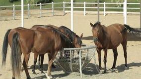 Τα καφετιά άλογα συγκεντρώνουν φιλμ μικρού μήκους